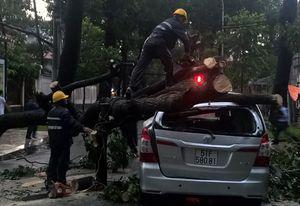 Cây đổ đè 2 ôtô ở trung tâm Sài Gòn