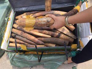 Hải quan bắt giữ 309kg ngà voi qua đường hàng không