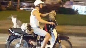 Báo Anh kinh ngạc thanh niên Việt Nam đi xe máy chở 4 chú mèo
