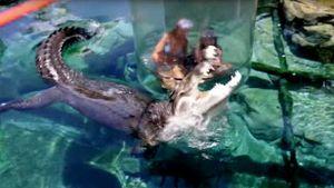 Thiếu nữ khóc thét khi đối mặt cá sấu 'khủng' dưới hồ