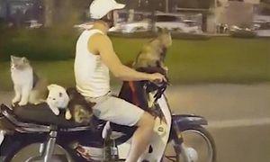 Thanh niên Việt chở 4 chú mèo gây chấn động mạng quốc tế