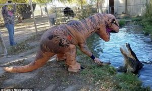 Giả làm khủng long để đùa giỡn với cá sấu khổng lồ