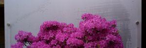 Những chậu bonsai màu sắc rực rỡ hút hồn người xem