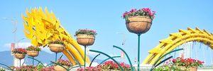 Đà Nẵng: Ưu tiên mua hoa do nông dân TP trồng để trang trí Tết