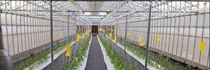 FPT quyết tâm đưa công nghệ cao vào nông nghiệp