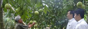 Triển khai Nghị quyết 14/NQ-CP: Agribank góp phần phát triển chuỗi giá trị nông nghiệp
