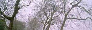 Dự báo thời tiết ngày mai 13/2: Bắc Bộ sắp đón đợt gió mùa mới