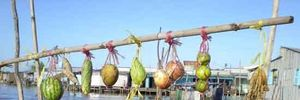 """Về đất Chín Rồng """"ngắm"""" chợ nổi Đồng bằng sông Cửu Long"""