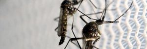 1 năm nữa mới có vaccine phòng chống virus Zika