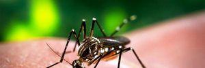 5.000 phụ nữ Colombia mang thai mắc virus Zika