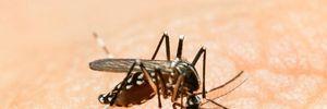 Việt Nam kêu gọi phòng chống dịch do virus Zika