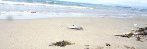 Khách du lịch hủy tour về biển miền Trung sau vụ cá chết