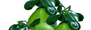 12 loại rau quả đánh tan mỡ bụng an toàn