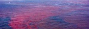 Chile hỗ trợ ngư dân bị ảnh hưởng bởi thủy triều đỏ