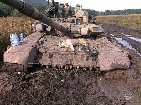"Tang T-90 Viet Nam tinh mua - ""hung than"" uy manh tren chien truong - Anh 4"