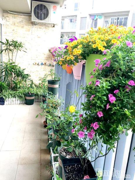 Ban công hơn 10m2 rực rỡ hoa nở bốn mùa