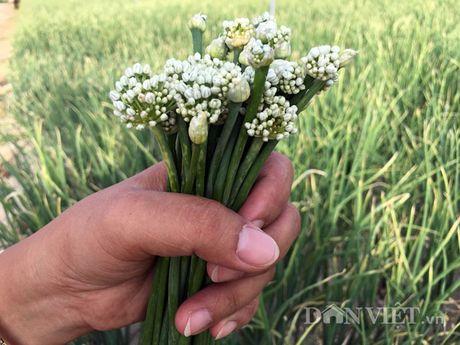 Hoa hanh - dac san ngon bo gia re nhu cho - Anh 1