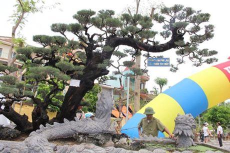 Hải Phòng: Cận cảnh những cây cảnh độc, lạ trị giá hàng tỷ đồng ở hồ Tam Bạc - Ảnh 3.