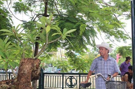 Hải Phòng: Cận cảnh những cây cảnh độc, lạ trị giá hàng tỷ đồng ở hồ Tam Bạc - Ảnh 4.