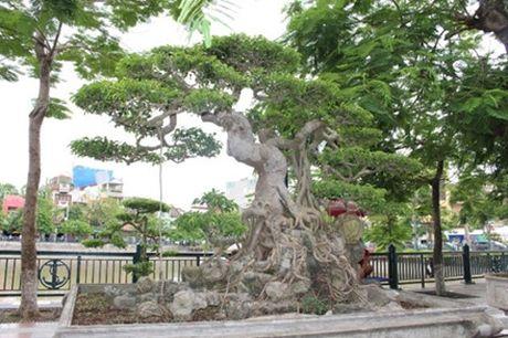 Hải Phòng: Cận cảnh những cây cảnh độc, lạ trị giá hàng tỷ đồng ở hồ Tam Bạc - Ảnh 6.