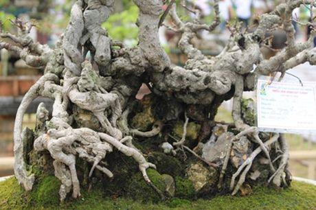 Hải Phòng: Cận cảnh những cây cảnh độc, lạ trị giá hàng tỷ đồng ở hồ Tam Bạc - Ảnh 7.