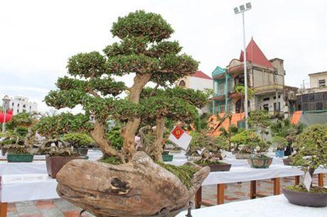 Hải Phòng: Cận cảnh những cây cảnh độc, lạ trị giá hàng tỷ đồng ở hồ Tam Bạc - Ảnh 8.