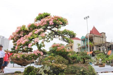 Hải Phòng: Cận cảnh những cây cảnh độc, lạ trị giá hàng tỷ đồng ở hồ Tam Bạc - Ảnh 9.