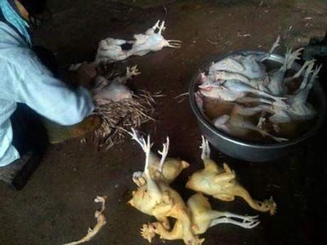 Viet Nam dung thu 2 the gioi vi co nhieu nguoi mac benh ung thu vi thuc an ban - Anh 2