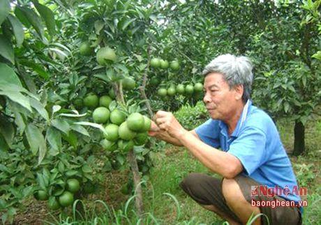 Thanh Chuong: Nhan rong mo hinh cam V2 - Anh 2
