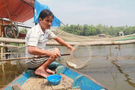 Tự tạo cơ hội: Nuôi cá sặt trên sông