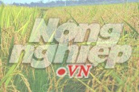 Phan lan Ninh Binh duoc vinh danh - Anh 1