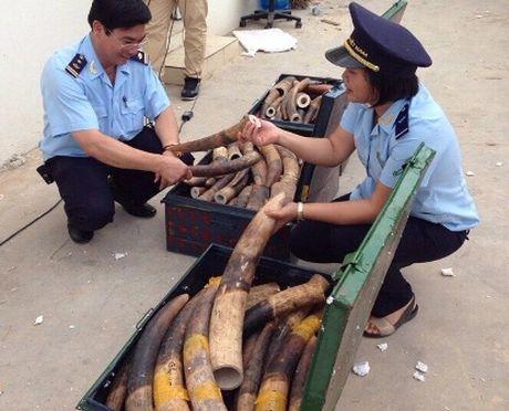 Hai quan bat giu 309 kg nga voi tai san bay Noi Bai - Anh 1