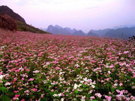 Thang 10, ve voi Le hoi hoa Tam giac mach Ha Giang - Anh 1