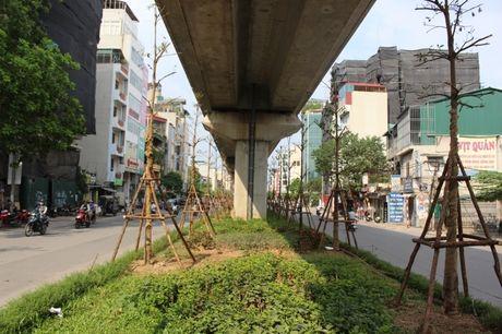 Trong cay duoi duong sat tren cao: Khong phai chi co o Ha Noi - Anh 9