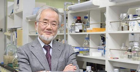 Giai Nobel Y-Sinh hoc 2016 vinh danh giao su Nhat Ban Yoshinori Ohsumi - Anh 1