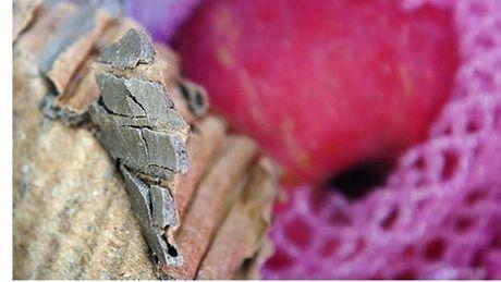 Chieu tro moi: Do be tong ben trong thung carton hoa qua de an gian trong luong - Anh 1