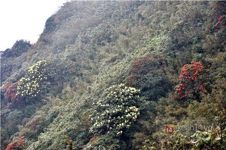 Len Hoang Lien Son thuong ngoan hoa do quyen muon mau - Anh 2