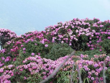 Len Hoang Lien Son thuong ngoan hoa do quyen muon mau - Anh 5