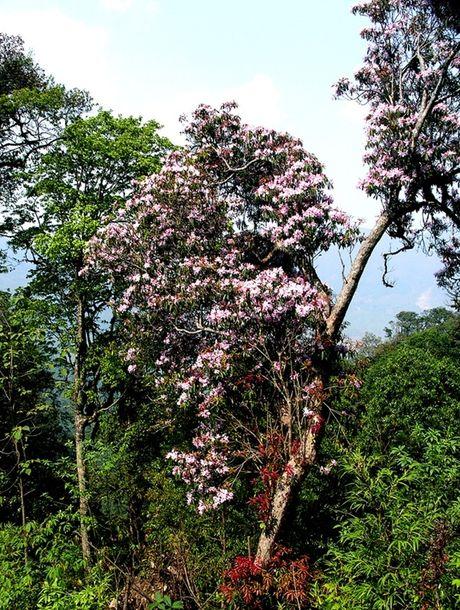 Len Hoang Lien Son thuong ngoan hoa do quyen muon mau - Anh 7