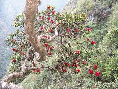 Len Hoang Lien Son thuong ngoan hoa do quyen muon mau - Anh 8