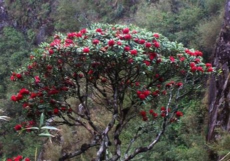 Len Hoang Lien Son thuong ngoan hoa do quyen muon mau - Anh 9