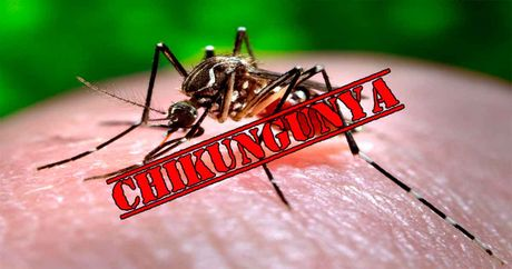 Chuyen gia bat mi cach ngan ngua sot chikungunya - Anh 2