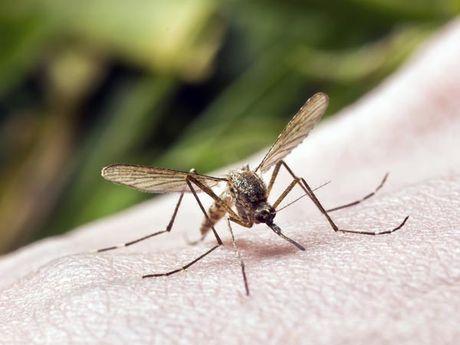 Chuyen gia bat mi cach ngan ngua sot chikungunya - Anh 3