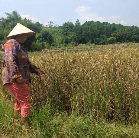 Vu ham chon chat thai y te: Rung minh nui rac 'dau doc' dan cu - Anh 1