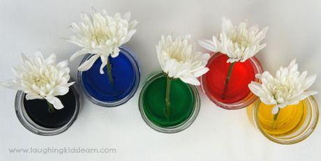 Bi quyet nhuom mau cho hoa cuc trang cuc nhanh - Anh 11