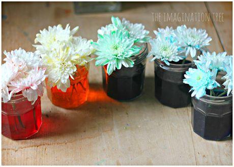 Bi quyet nhuom mau cho hoa cuc trang cuc nhanh - Anh 13