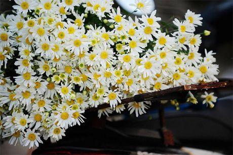 Bi quyet nhuom mau cho hoa cuc trang cuc nhanh - Anh 1