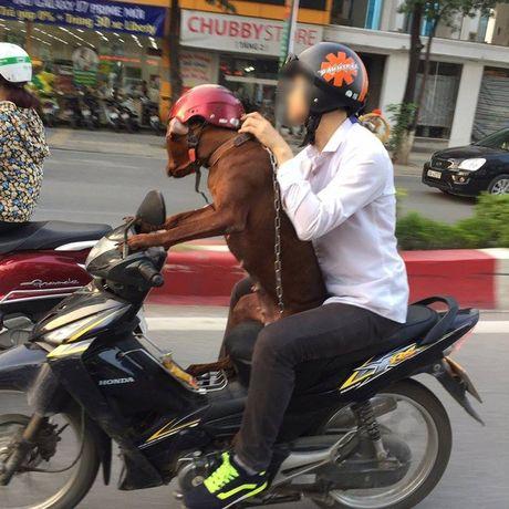 Hinh anh chu cho dieu khien xe may tren duong pho Ha Noi gay tranh cai - Anh 1
