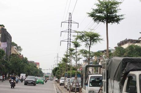 Kho hieu bang Dai Loan duoi... luoi dien cao ap Ha Noi - Anh 1