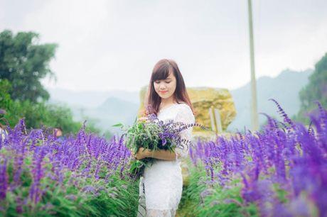 Hoa Oai huong nhuom tim thung lung Bac Ha - Anh 10
